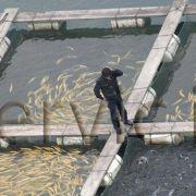 شیلات:پرورش ماهی و سایر آبزیان