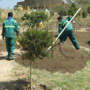 پیمانکاران احداث فضای سبز
